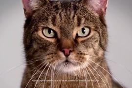mercedes gatto